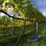 Serra – Três roteiros para os apreciadores de vinhos