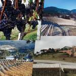 Conheça as vinícolas de Santa Catarina e apaixone-se!